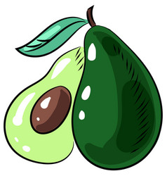 Avocado icon fruit isolated vector