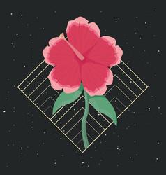 decorative flower delicate ornament nature vector image
