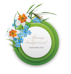 round template narcissus and foget-me-not vector image