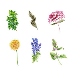 Various isolated watercolor herbal tea collection vector