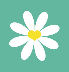 white chamomile daisy cute flower plant vector image