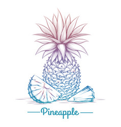 colorful pineapple sketch vector image