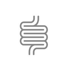 Human intestine line icon healthy internal organ vector