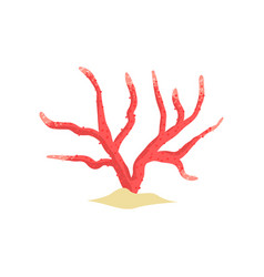 Red antler soft coral on sandy seabed tropical vector