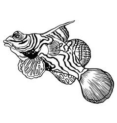 Tropical mandarin fish - chinese perch or dragonet vector