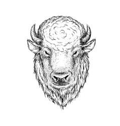 head of buffalo vector image vector image