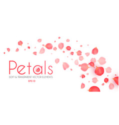 flying petals abstract background cosmetics vector image
