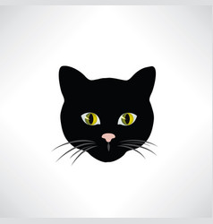 cat kitten face isolated pretty pet design element vector image
