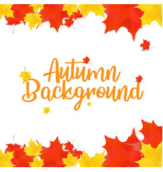 autumn top view composition vector image
