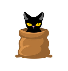 Cat in bag pet in sack allegory bad buy vector