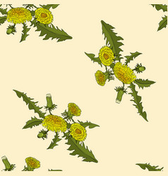 dandelions floral seamless pattern vector image