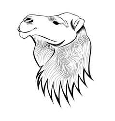 Lined camel head vector