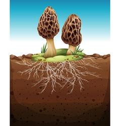 Mushroom growing from underground vector image