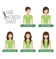 hair length chart front view vector image vector image