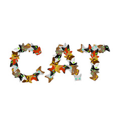 cat sign text letters of cats pet font home vector image vector image