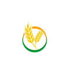 agriculture wheat logo vector image