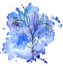 Comfrey at watercolor background vector