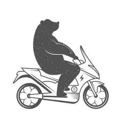 Funny Bear vector image