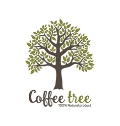 Hand drawn graphic coffee tree vector image