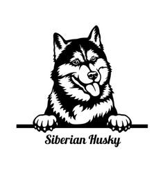 Siberian husky peeking dog - head isolated on vector