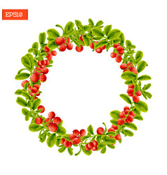 wreath of berries and leaves of lingonberry plant vector image