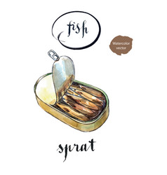 Opened preserve of sprats vector