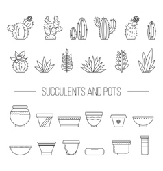 Set of succulent plants cactuses and potsLinear vector image vector image