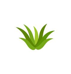 Aloe vera icon design template vector