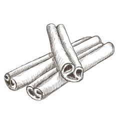 Cinnamon sticks hand drawn sketch vector