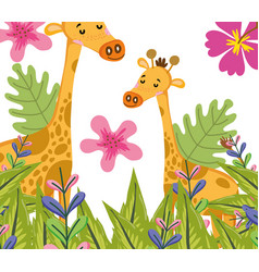 Cute giraffes wildlife cute cartoons vector