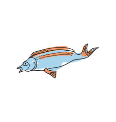 ocean fish hand drawn isolated icon vector image