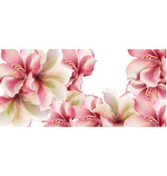 pink lily flowers watercolor spring season vector image