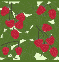raspberries seamless pattern vector image