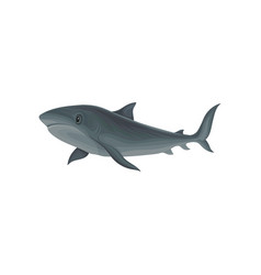 shark marine mammal inhabitant of sea and ocean vector image