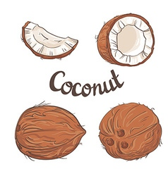 Coconut set - the whole nut a coco segment and vector image