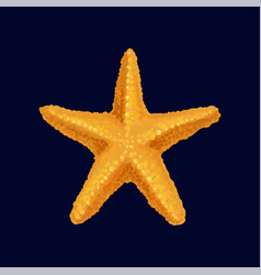 starfish sea star and shell vector image
