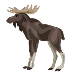 canadian deer icon cartoon style vector image