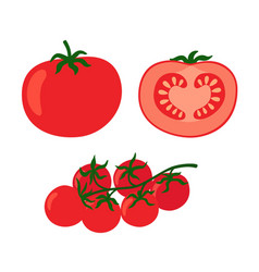 collection fresh red tomatoes vector image