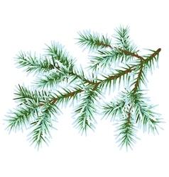 Frozen fir branch vector image