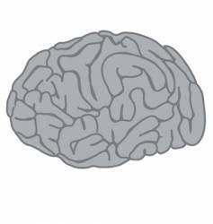 The brain vector
