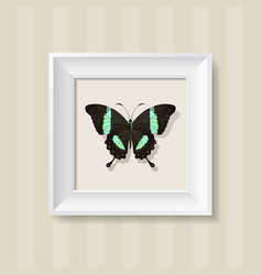 green butterfly in a white frame vector image vector image