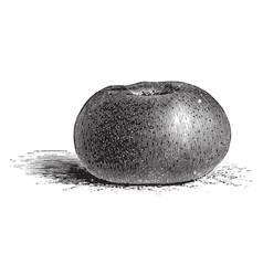 Court pendu plat apple vintage vector