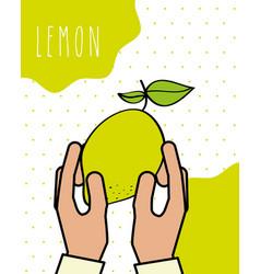 hands holding lemon fresh natural drawn image vector image