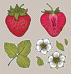 Isolated strawberries graphic stylized drawing vector