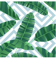 seamless pattern tropical banana leaves on vector image