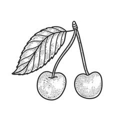 sweet cherry sketch vector image