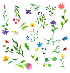 Watercolor doodle plants and flowers vector