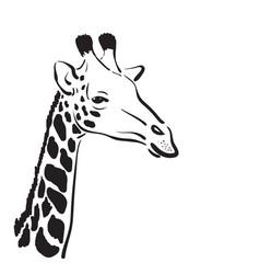 giraffe head on white background wild animals vector image