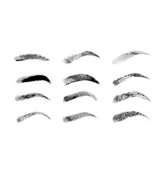 eyebrow shapes various types of eyebrows classic vector image