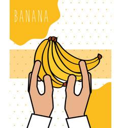 hands holding bananas fresh natural drawn image vector image